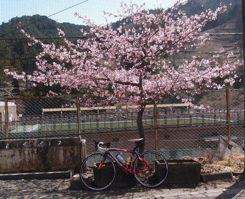 P3261482sakura2.jpg